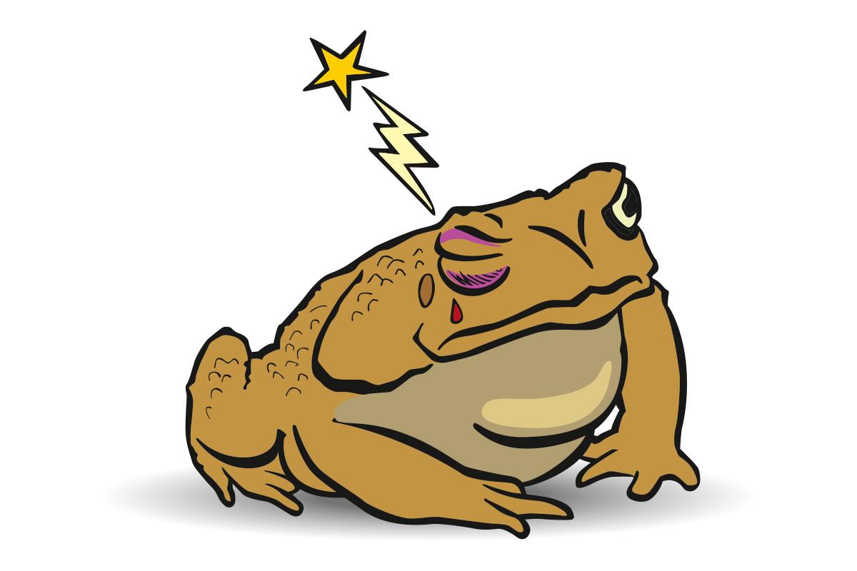 Splash-Cane-Toad